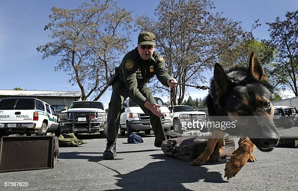 S Border Patrol Agent Sean Huntsman works his German shepherd Birt during a drug detection training session May 9 2006 in the mountains north of...