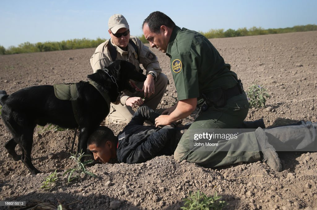 S. Border Patrol canine team works with an U.S. Air and Marine agent to detain an undocumented immigrant after chasing him down near the U.S.-Mexico border on April 11, 2013 near Mission, Texas. A group of 16 immigrants from Mexico and El Salvador said they crossed the Rio Grande River from Mexico into Texas during the morning hours before they were caught. The Rio Grande Valley sector of has seen more than a 50 percent increase in illegal immigrant crossings from last year, according to the Border Patrol. Agents say they have also seen an additional surge in immigrant traffic since immigration reform negotiations began this year in Washington D.C. Proposed refoms could provide a path to citizenship for many of the estimated 11 million undocumented workers living in the United States.