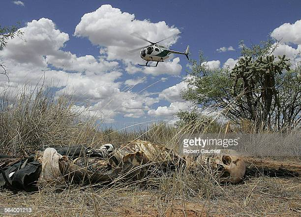 A US Border Patrol helicopter hovers over the decaying body laying in the southern Arizona desert south of Tucson where Cesareo Dominguez Saldivar of...