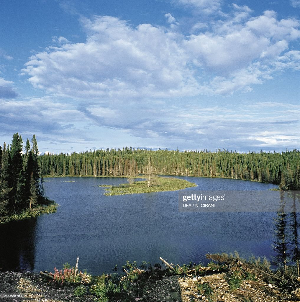 Boreal forest... : News Photo