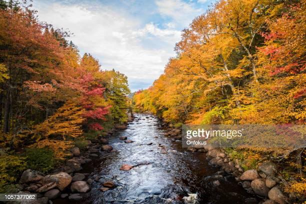 寒帯の森林自然と秋の紅葉シーズン、ケベック、カナダの川