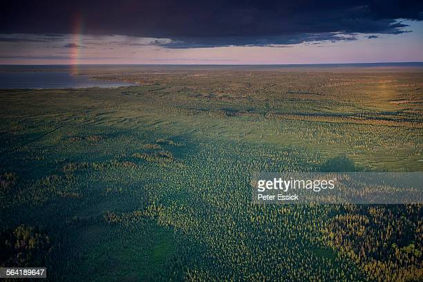 Boreal Forest near McClelland Lake with exploration cut lines , north of Fort McMurray, Alberta, Canada.