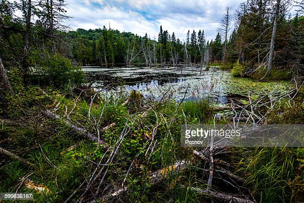 boreal forest - lake superior provincial park stock pictures, royalty-free photos & images