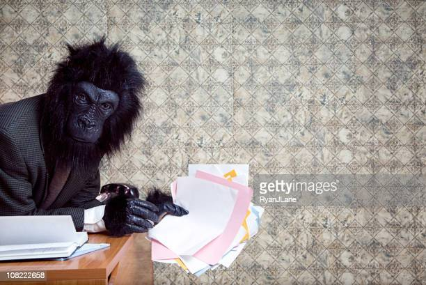 bored and frustrated business gorilla in the office - monkey suit stock pictures, royalty-free photos & images