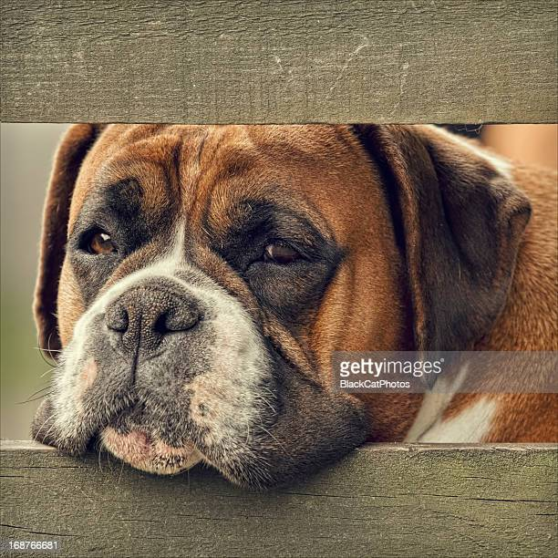 bored looking dog - morpeth stock pictures, royalty-free photos & images