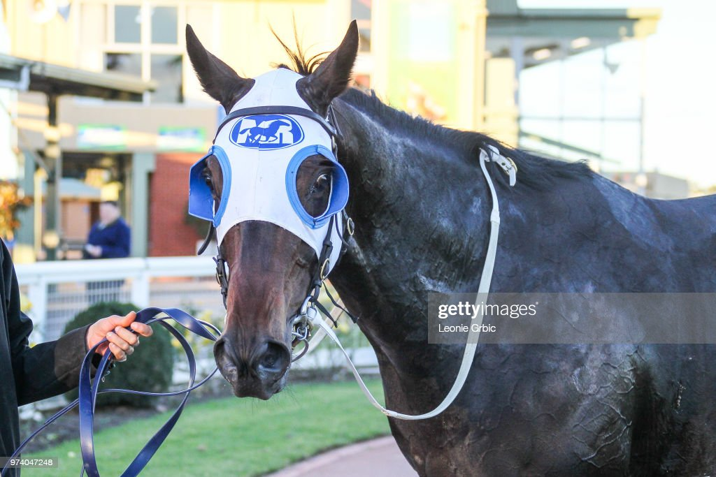 Borella after winning the Maffra Cup Day 1 July Gippsland Middle Distance Series Heat 5 at Sale Racecourse on June 14, 2018 in Sale, Australia.