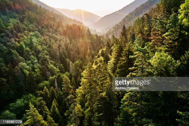 borjomi kharagauli national park, georgia - woodland stock pictures, royalty-free photos & images