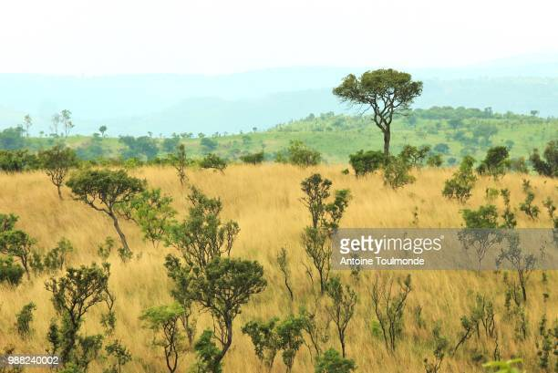 born again. - burundi east africa stock pictures, royalty-free photos & images