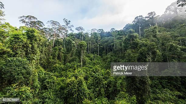 Borneo Danum Valley Oldest Rainforest