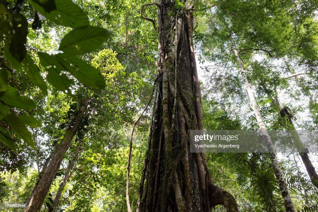 Borneo rainforest, Malaysia : Stock Photo