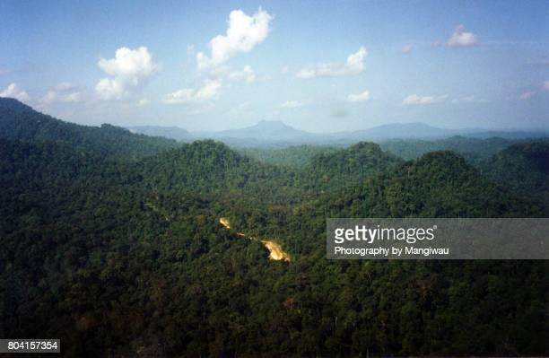 borneo rainforest - pinnacle peak stock-fotos und bilder
