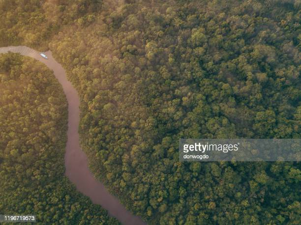 borneo wildlife and jungle - island of borneo stock pictures, royalty-free photos & images