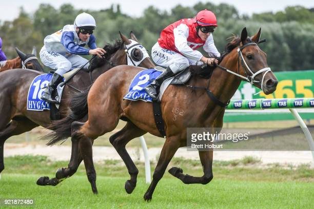Borrow ridden by Brian Park wins the Iron Jack FM Maiden Plate at Kyneton Racecourse on February 21 2018 in Kyneton Australia