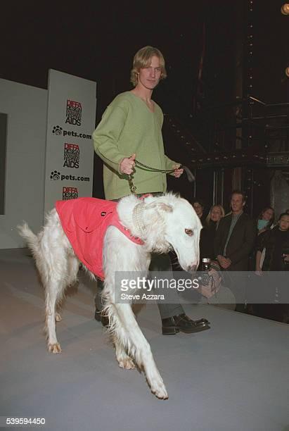 Borzoi in designer dog collar