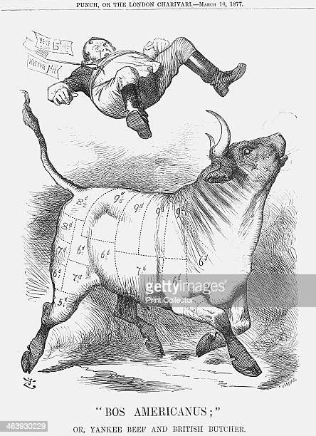 Bos Americanus 1877 An American bull mapped out with its joints and cuts of meat is carefully priced as it tosses the British butcher out of the way...