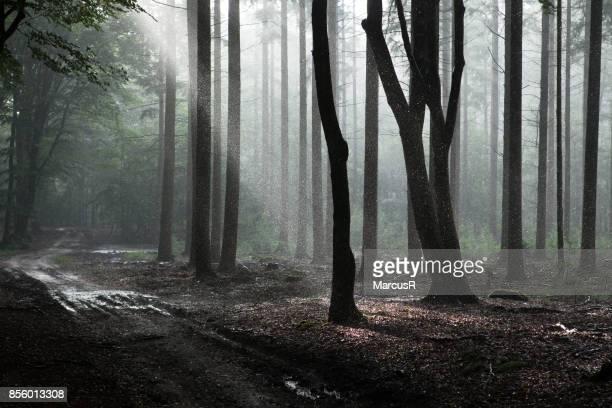 Bos met regen en zon