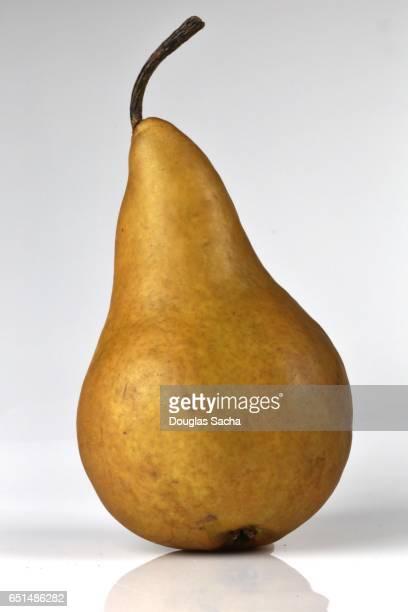 Bosc Pear (pyrus communis)
