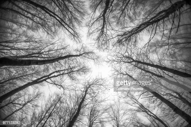 bosco inquietante - bare tree stock pictures, royalty-free photos & images