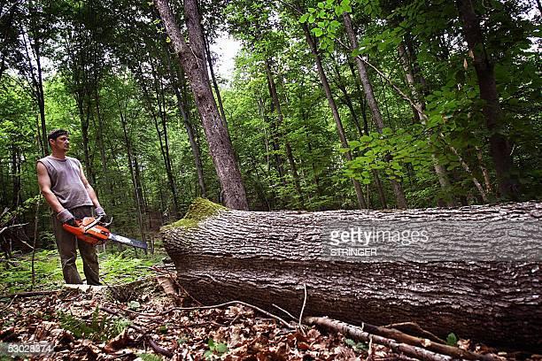 Bosnian woodcutter Vladimir Jovic takes a rest after cutting a tree near the northwestern Bosnian village of Suhaca 6 June 2005 Bosnia still...