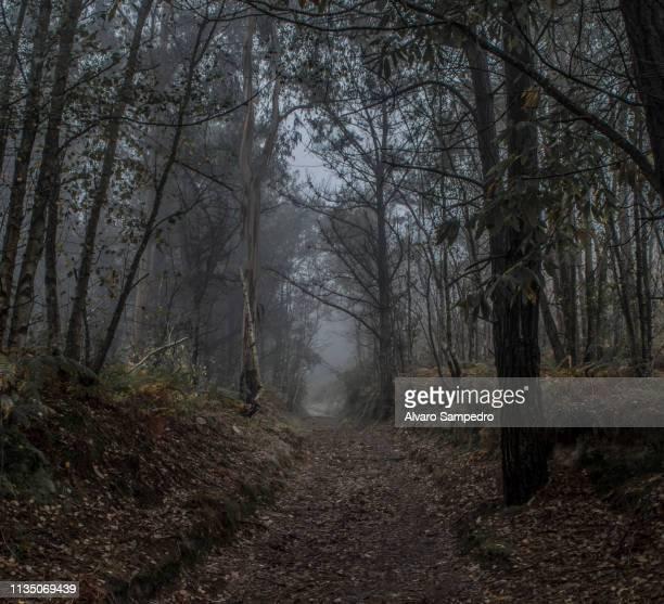 bosque asturiano - llanes fotografías e imágenes de stock
