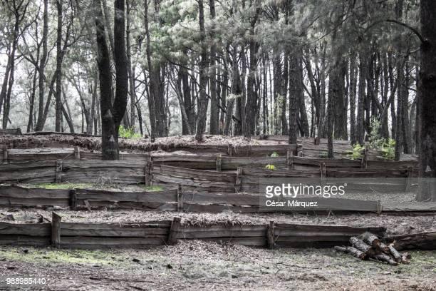 Bosque Colomos II