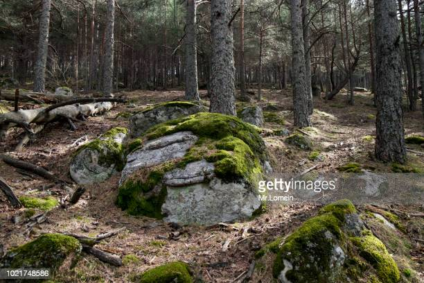 bosque de arboles y piedras con musgos verdes - moss stock pictures, royalty-free photos & images