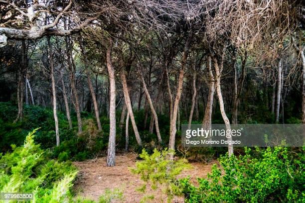 Bosque encantado - Enchanted forest