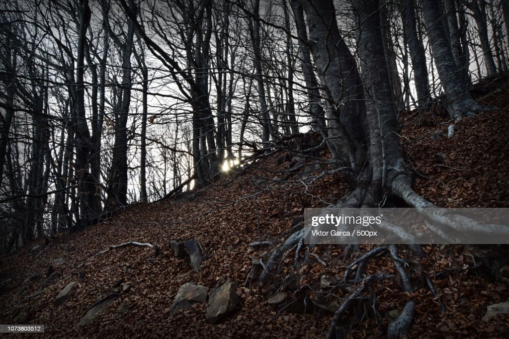 Bosque Misterioso High Res Stock Photo Getty Images