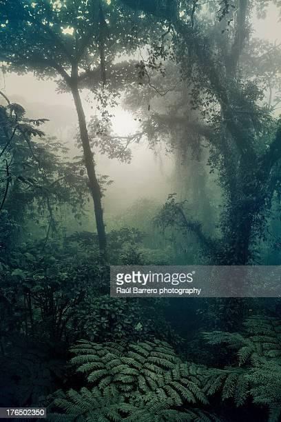 Bosque Nuboso, Monteverde. Costa Rica.