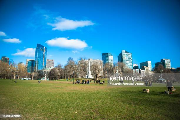 boston common and urban skyline - boston common stock pictures, royalty-free photos & images