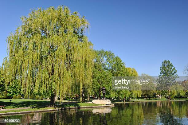 boston common - boston common stock pictures, royalty-free photos & images