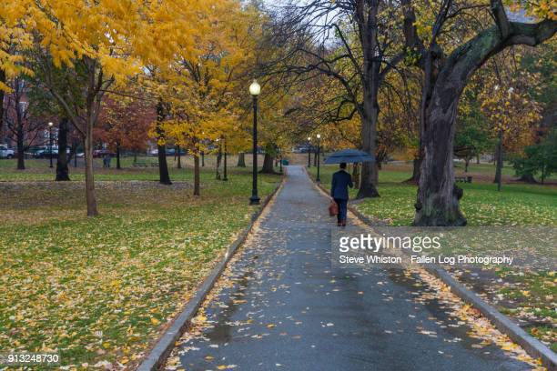 boston commons at dusk in the rain - boston common stock pictures, royalty-free photos & images