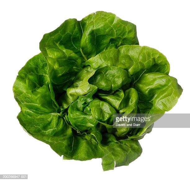 Boston lettuce, overhead view