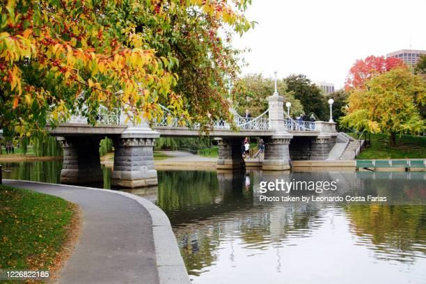 boston public garden - boston massachusetts stock pictures, royalty-free photos & images