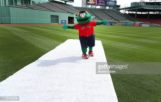 Boston Red Sox mascot Wally The Green Monster has the park to himself as he walks on a protective carpet to a ceremony in center field as Fenway Park...