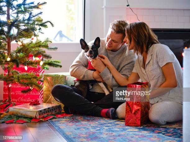 ボストンテリア犬は彼の家族とクリスマスを祝う - 公的祝日 ストックフォトと画像