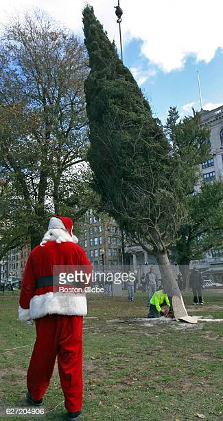 Boston's official Christmas Tree from Nova Scotia a 46foot white spruce from Annapolis County arrives on Boston Common under the watchful eyes of...