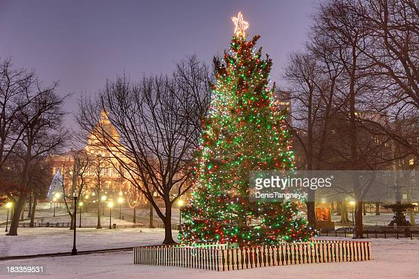 boston's official christmas tree - boston common stock pictures, royalty-free photos & images