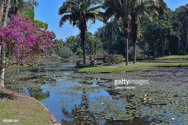 botanic garden - jardim botânico - fotografias e filmes do acervo