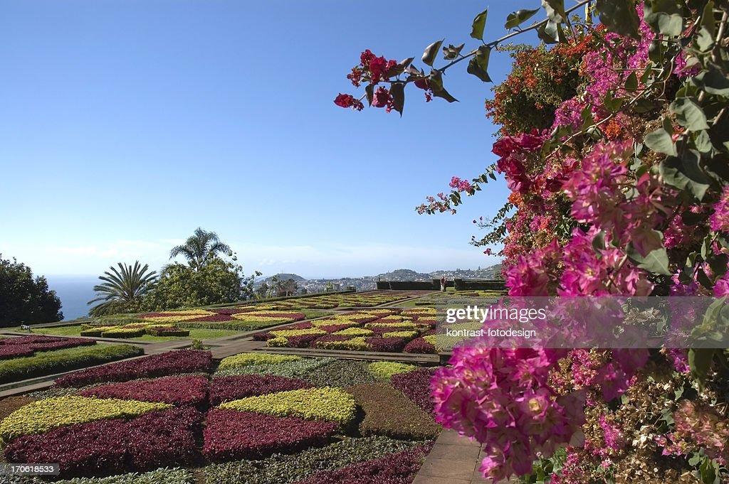 Botanical Garden, Funchal, Madeira : Stock Photo