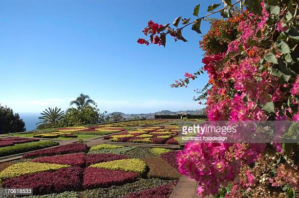 botanical garden, funchal, madeira - lareira stock pictures, royalty-free photos & images