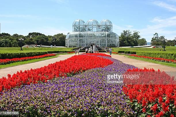 botanical garden in curitiba - curitiba stock pictures, royalty-free photos & images