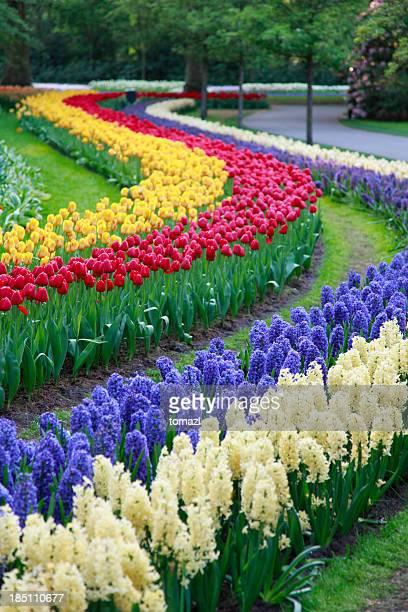 Botanical garden in spring time