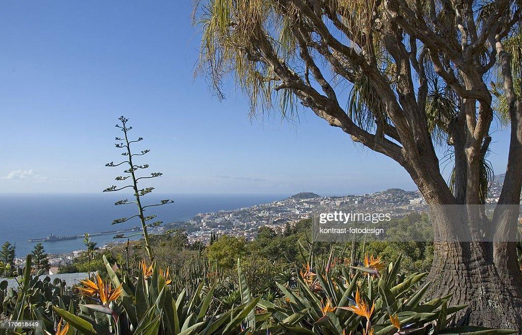 Jardim botânico, de Madeira : Foto de stock