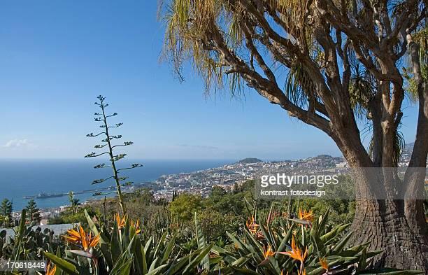 Jardim botânico, de Madeira