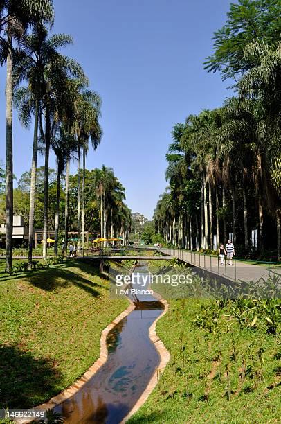 botanical garden - jardim botânico - fotografias e filmes do acervo