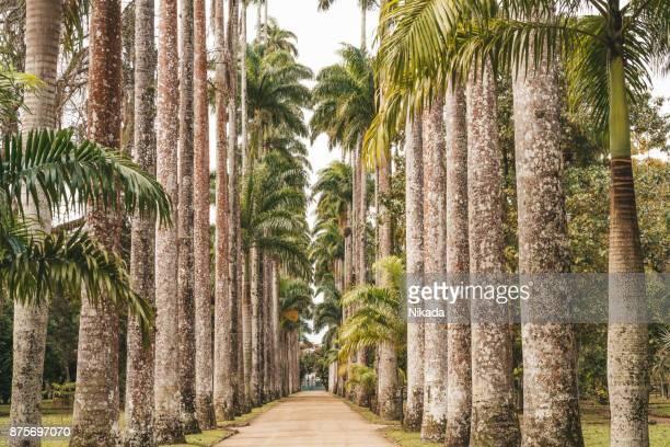 jardim botânico, rio de janeiro, brasil - jardim botânico - fotografias e filmes do acervo
