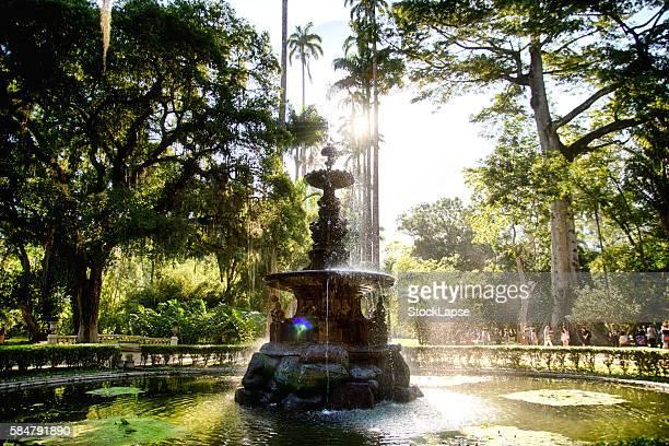 botanical garden rio de janeiro - botanical garden stock pictures, royalty-free photos & images