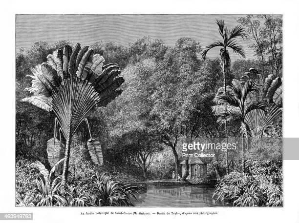 Botanical garden SaintPierre Martinique 19th century