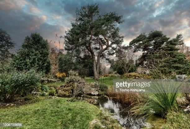 botanical gardens in geneva, switzerland - ginebra suiza fotografías e imágenes de stock